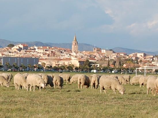 frejus-moutonne.jpg